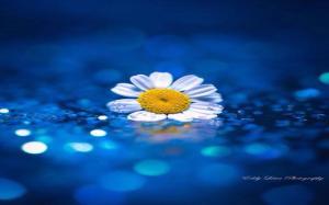 floating_flower_nature_water_bokeh_daisy_1680x1050_hd-wallpaper-1837660